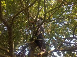 Kath im Baum